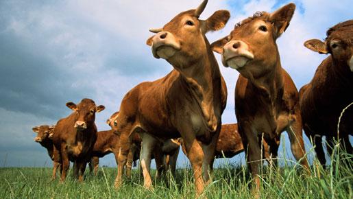 Бразилия получила разрешение на поставки говядины в США