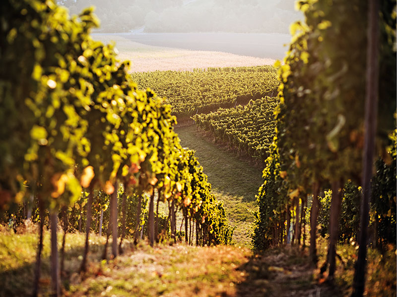 Climate change is set to shake up the fine wine industry – here's